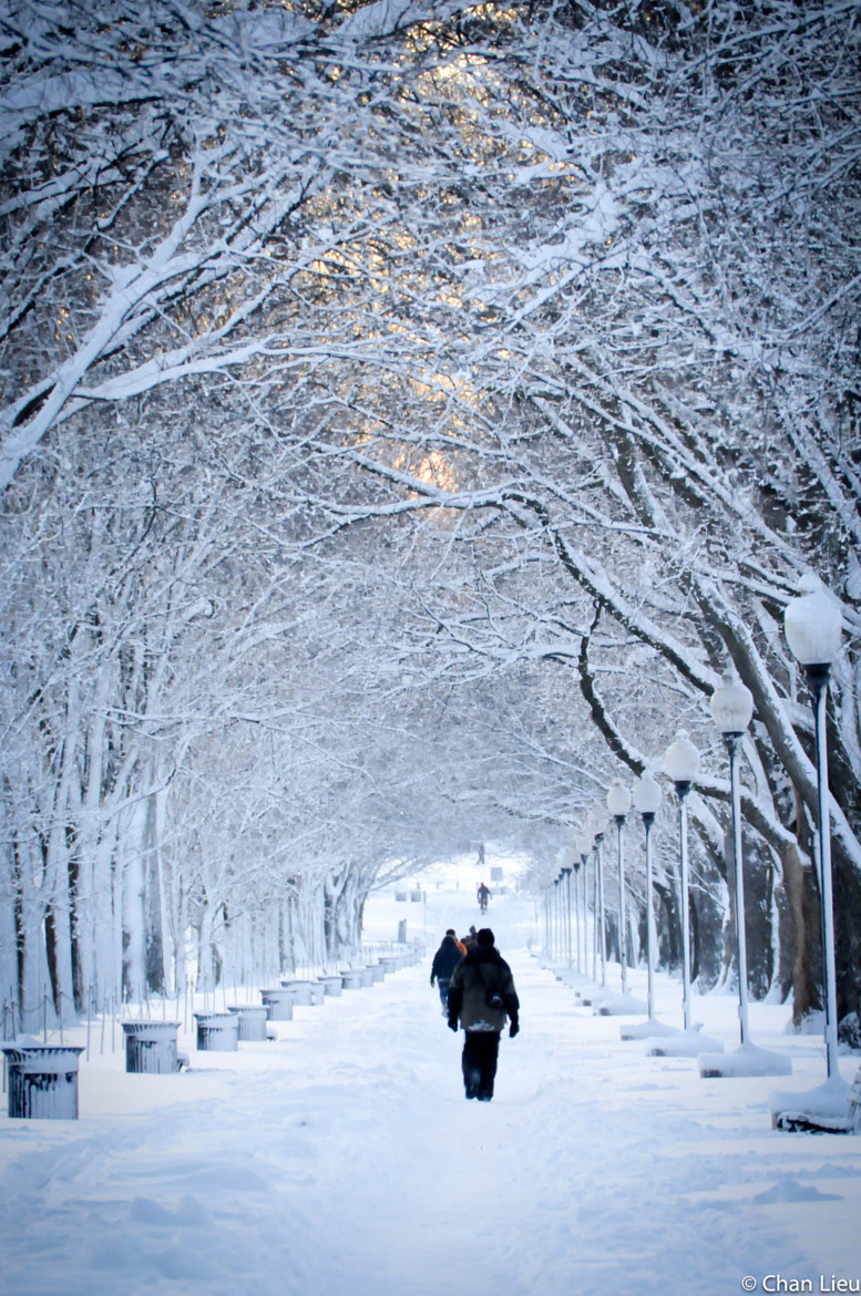 Photograph Snow Walk by chanlicious on 500px