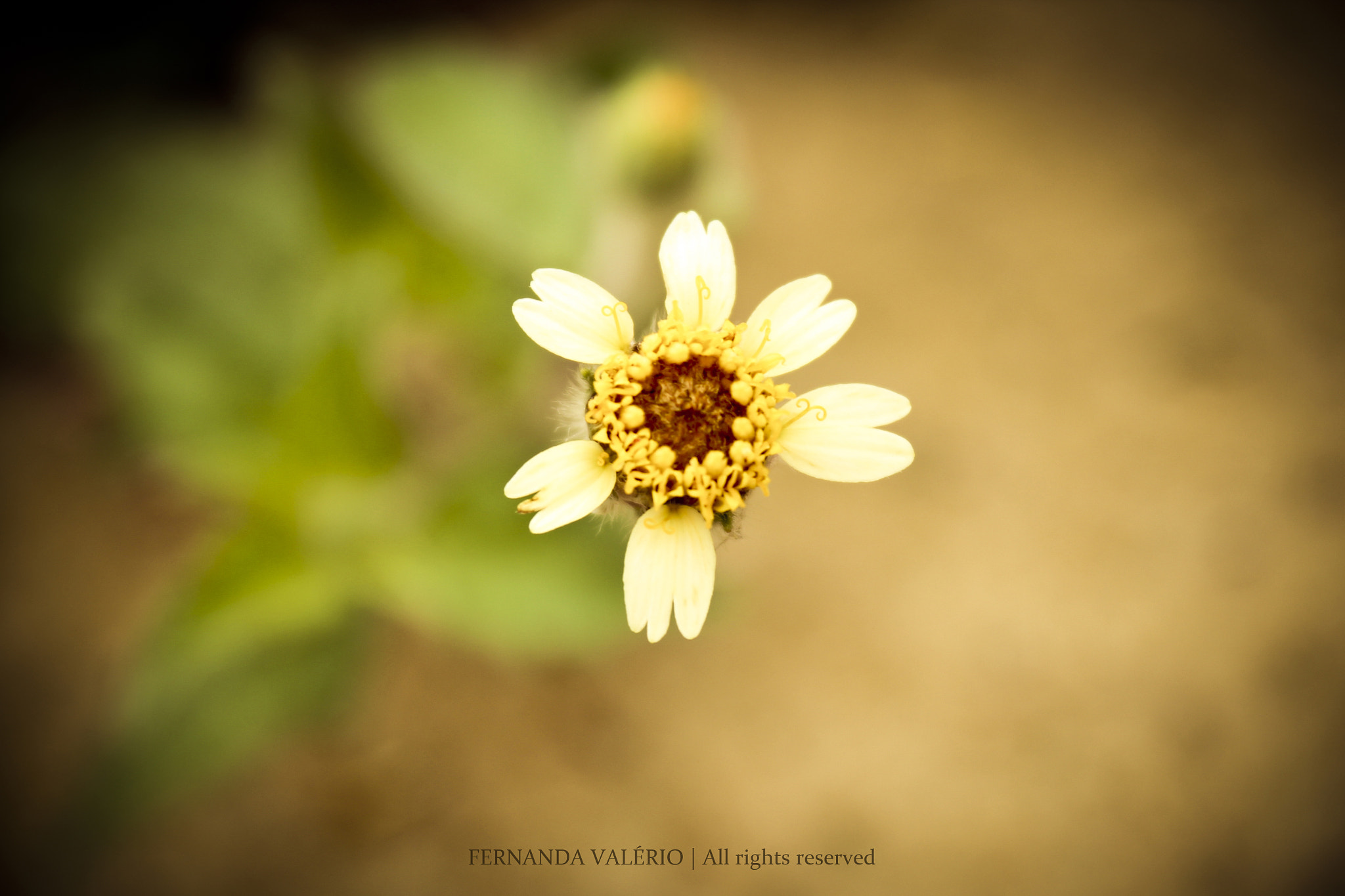 Photograph Branco e amarelo | White and Yellow by Fernanda Valério on 500px
