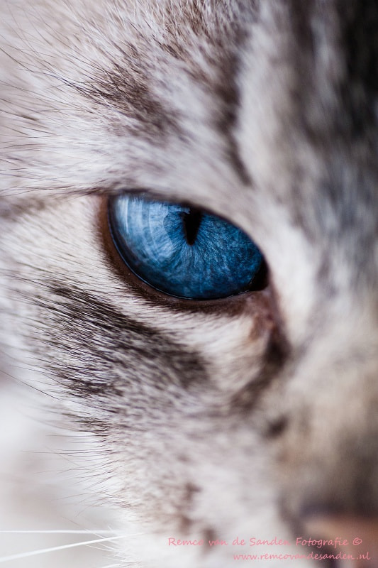 Photograph Old blue eyes by Remco van de Sanden on 500px