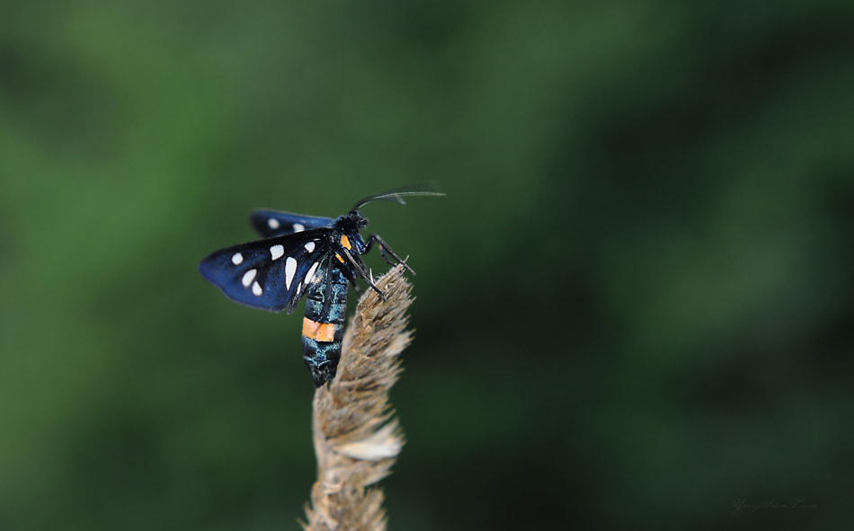 Photograph Butterfly by yavuzselimturan  on 500px