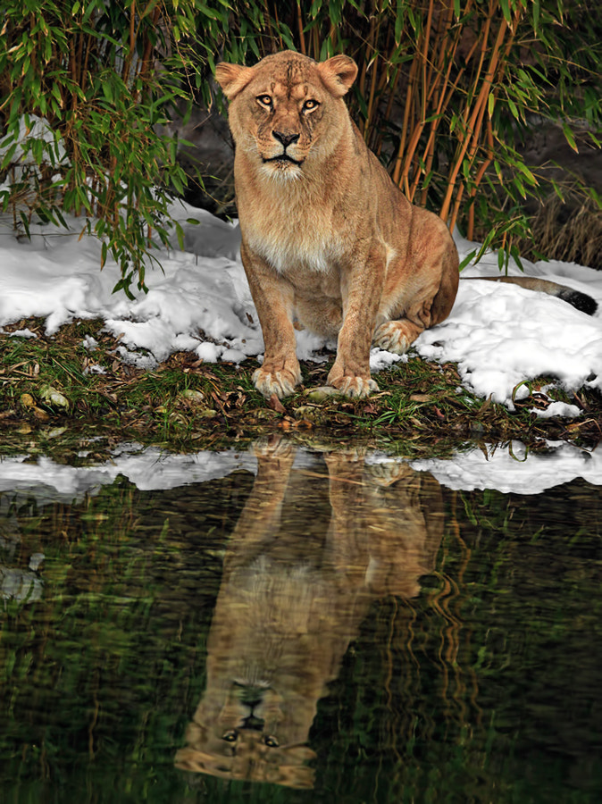 Photograph First Snow in Narnia - Waiting for Aslan by Klaus Wiese on 500px