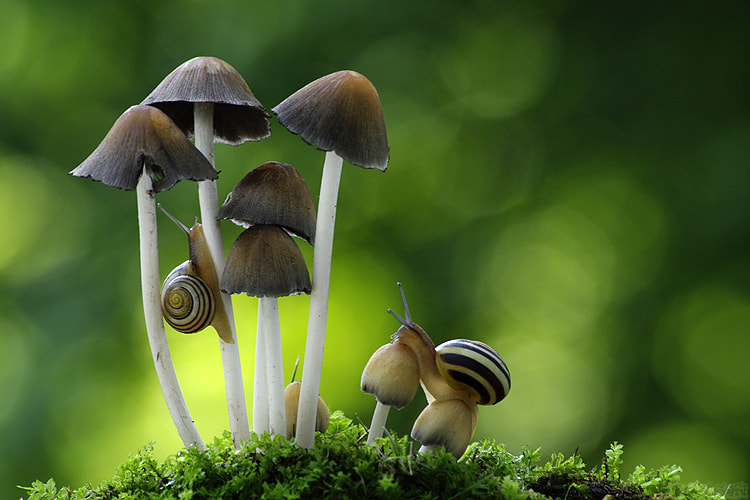 Photograph Exploring the Toadstools by Vie Lipowski on 500px
