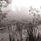 Marsh in Fog II