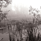 Marsh in Fog II