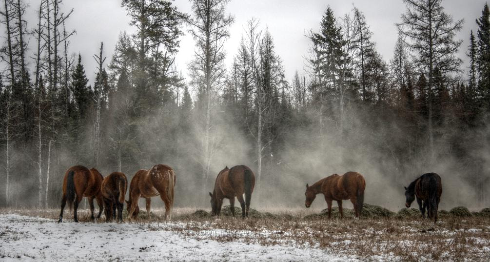 Photograph The Herd by Eelhsa Marie Photography on 500px