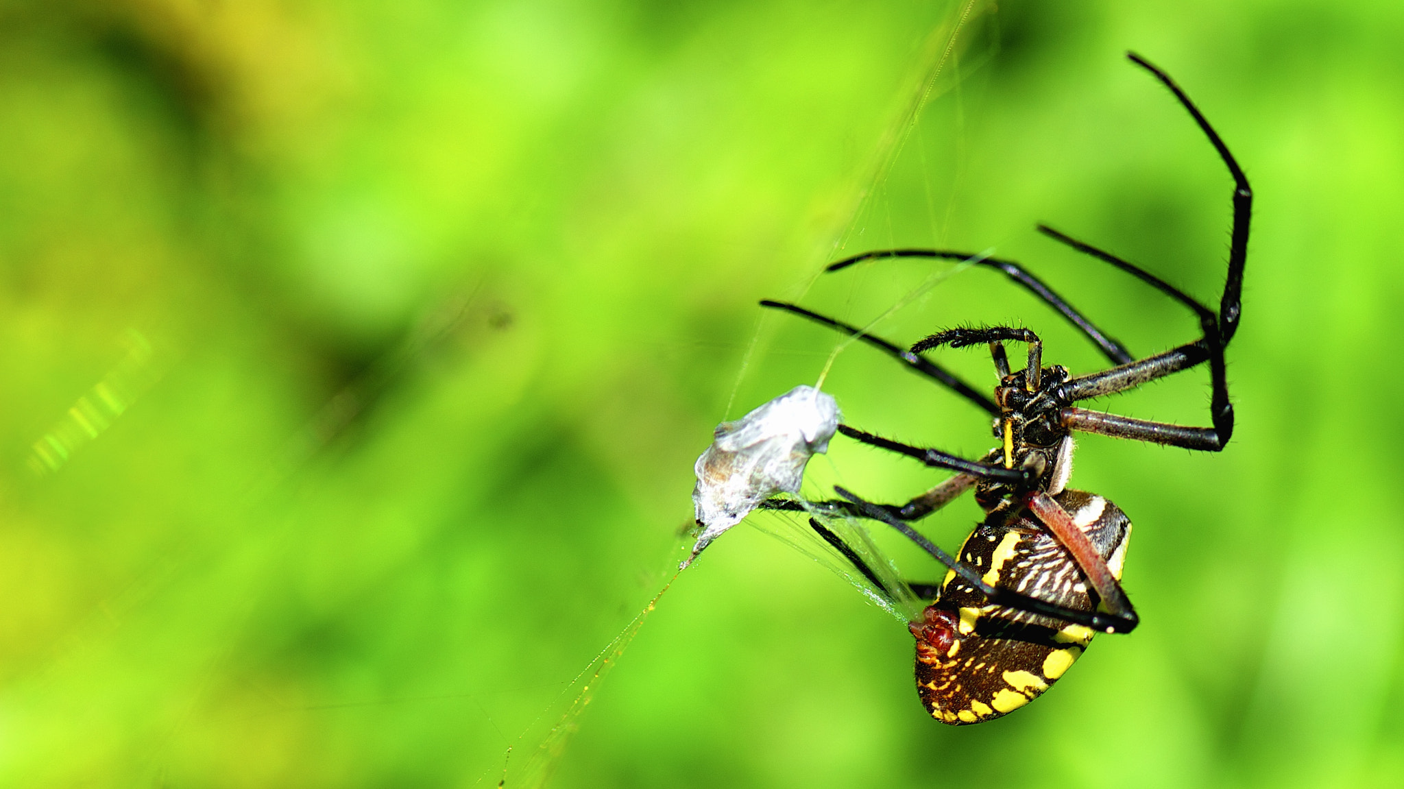 Photograph Orbit Spider by Danny Perez on 500px