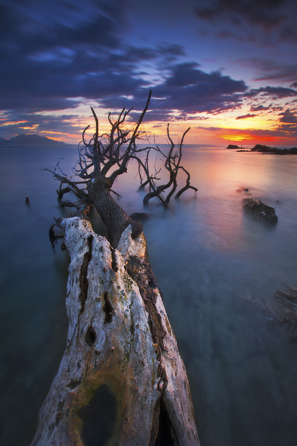 Photograph The Dead Arise by Dylan Toh  & Marianne Lim on 500px