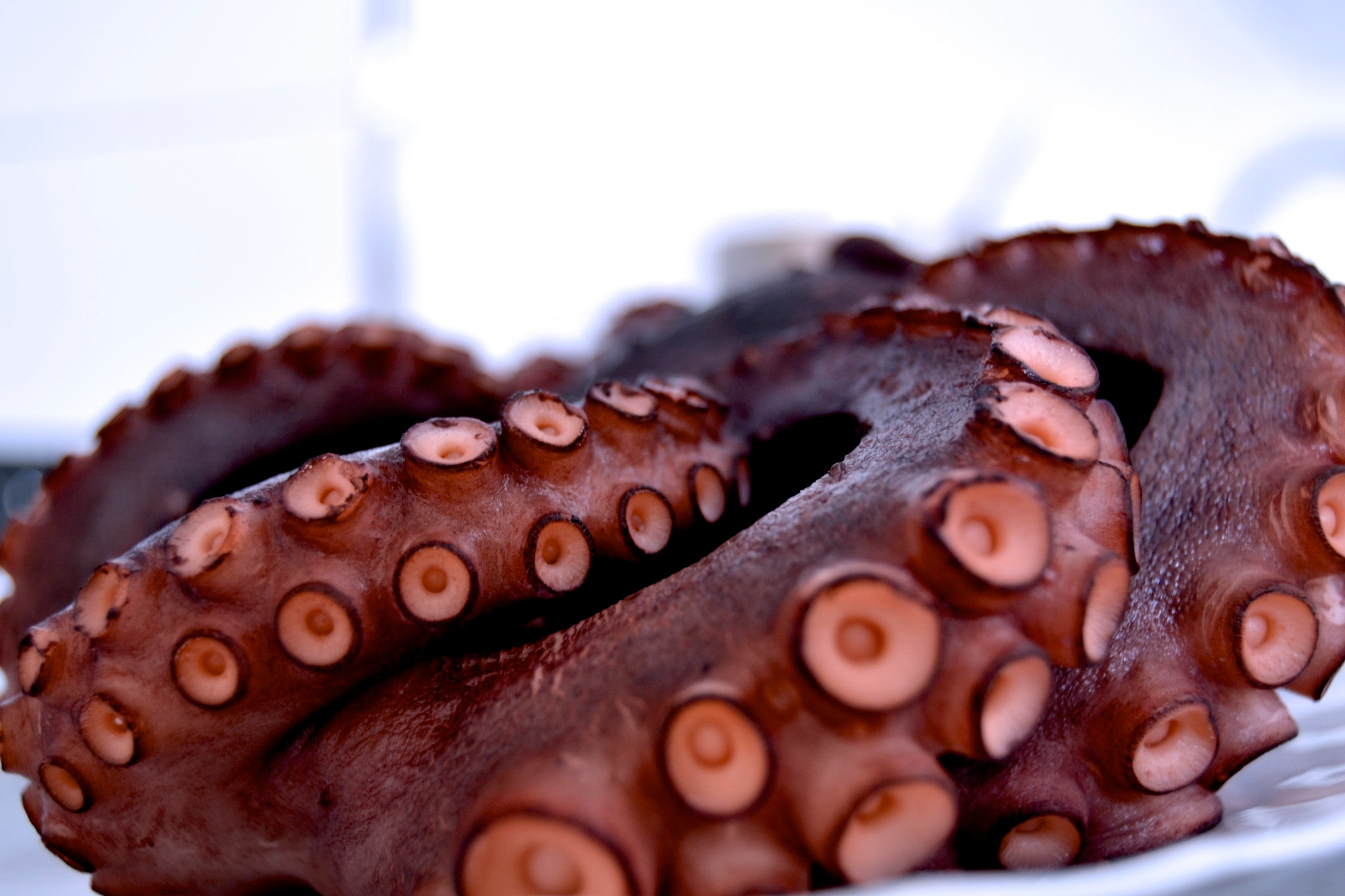 Photograph Pulpo by Iker Irueta on 500px