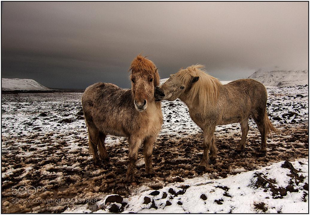 Photograph Love me Tender by wim denijs on 500px
