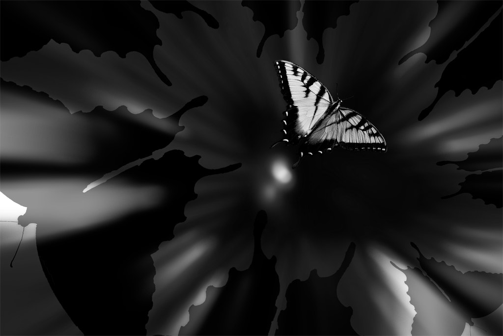 Photograph Butterfly Big Bang by Rocco Saya on 500px