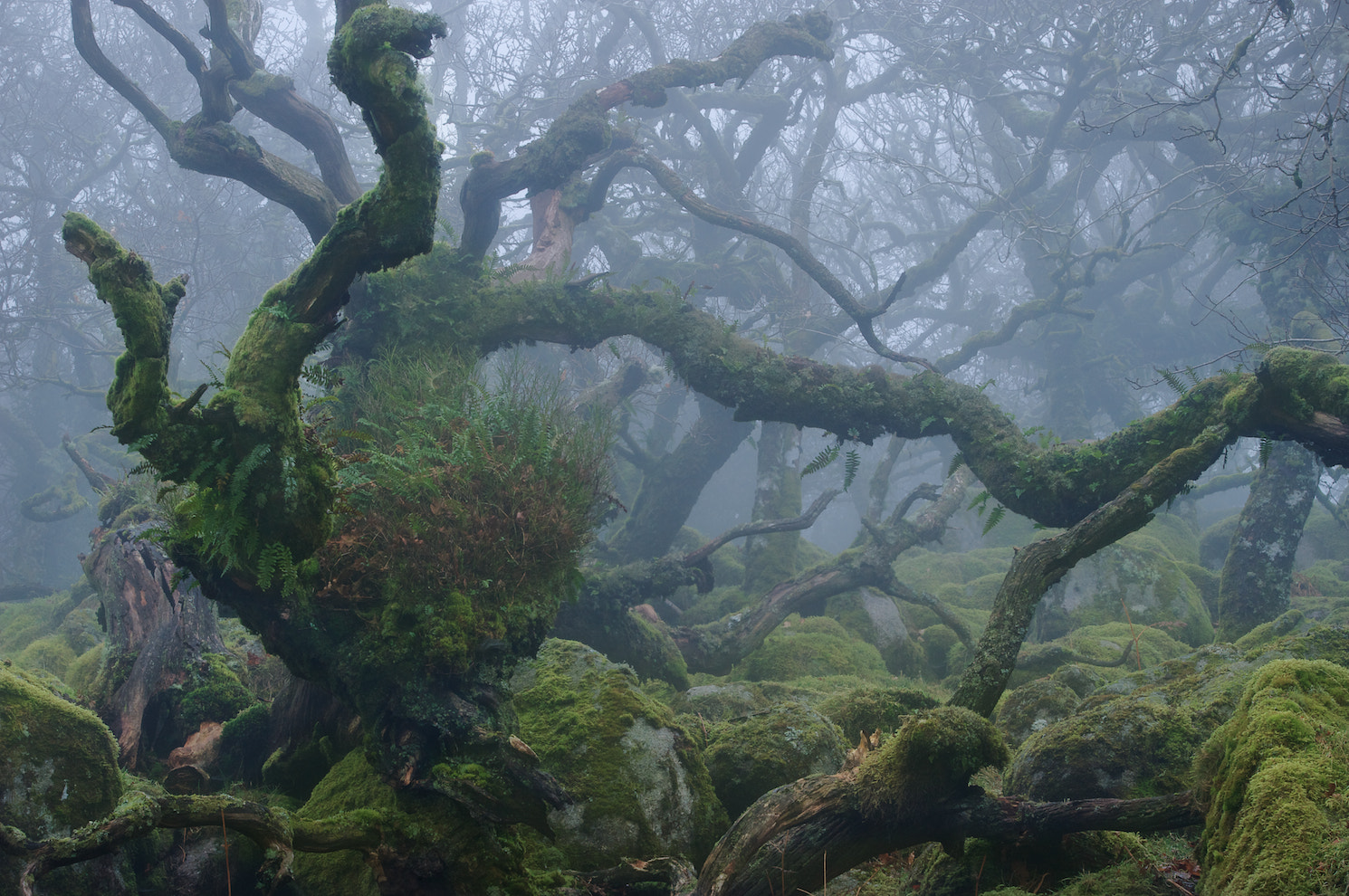 Photograph Primordial by duncan george on 500px