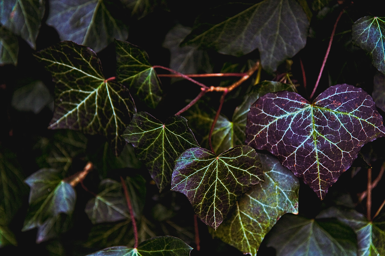 Photograph Ivy-hearts by Sebastian  Warneke  on 500px