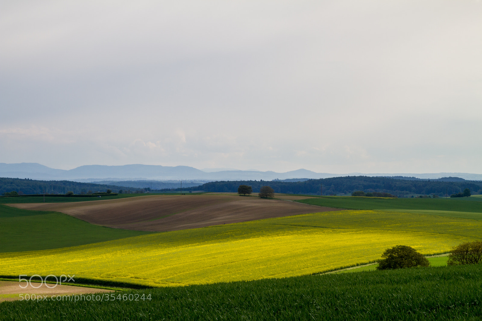 Photograph Spring Day 1 by Philipp K on 500px