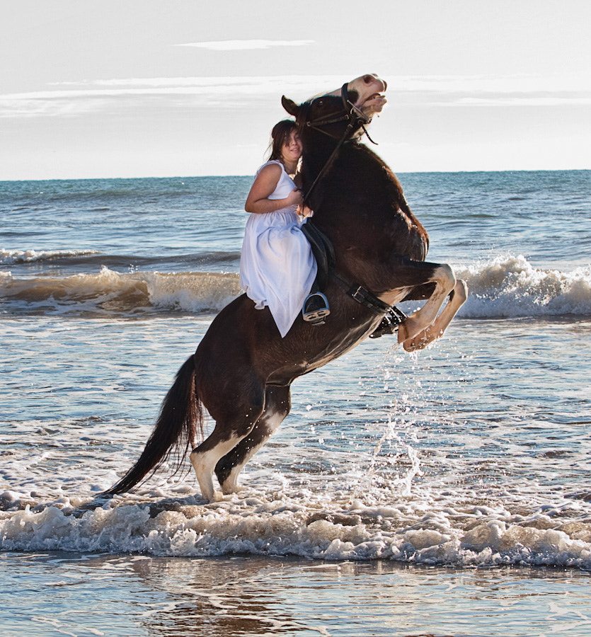 Photograph Horse in the Beach by LEON Forado on 500px