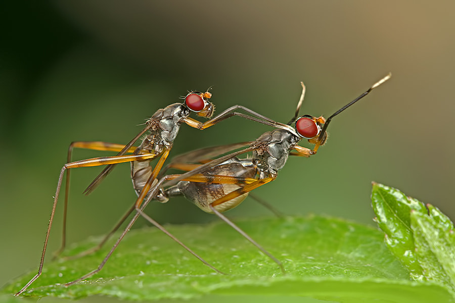 Photograph In Love by Ganjar Rahayu on 500px