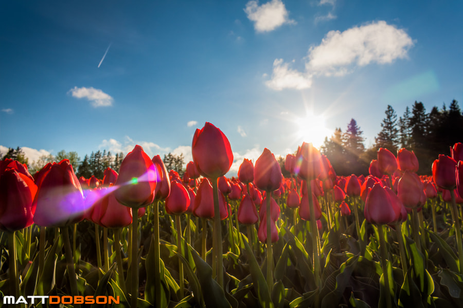 Photograph Kissed by the Sun by Matt Dobson on 500px