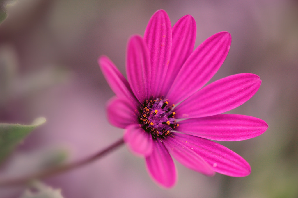 Photograph Summer's beautiful color by Almqvist Photo on 500px