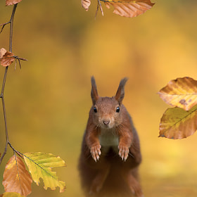 Forest Squirrel by Edwin Kats on 500px.com