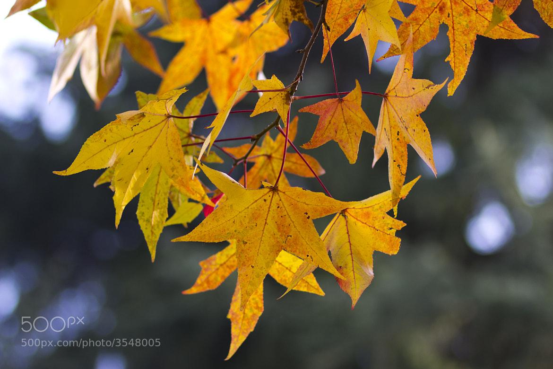 Photograph yellow autumn by Gaetano La Rocca on 500px