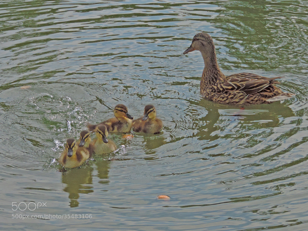 Photograph Mom cares its kids by Dieter Beer on 500px