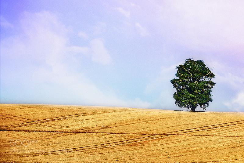 Photograph UK Landscape IIX by Matic Golob on 500px