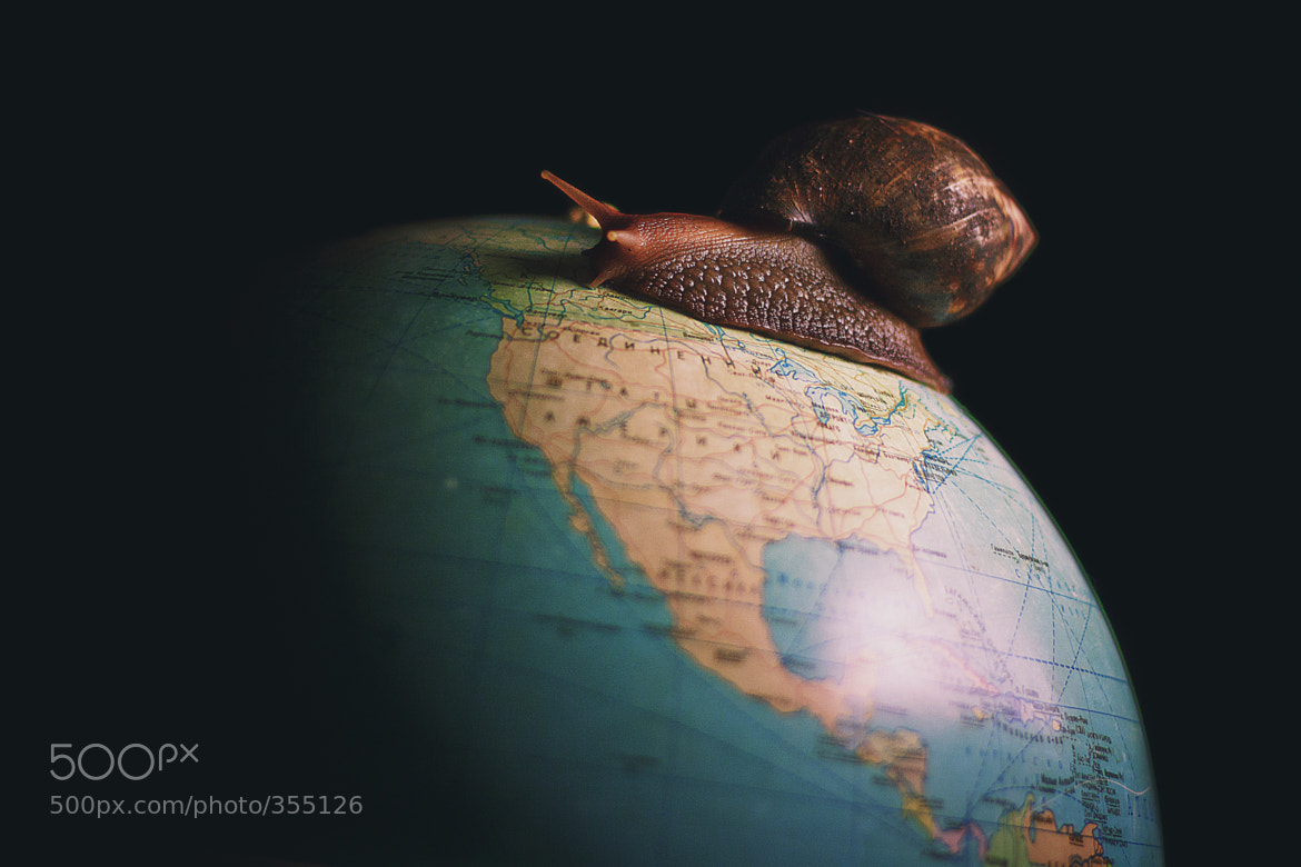 Photograph The big snail 2 by Firko :) on 500px