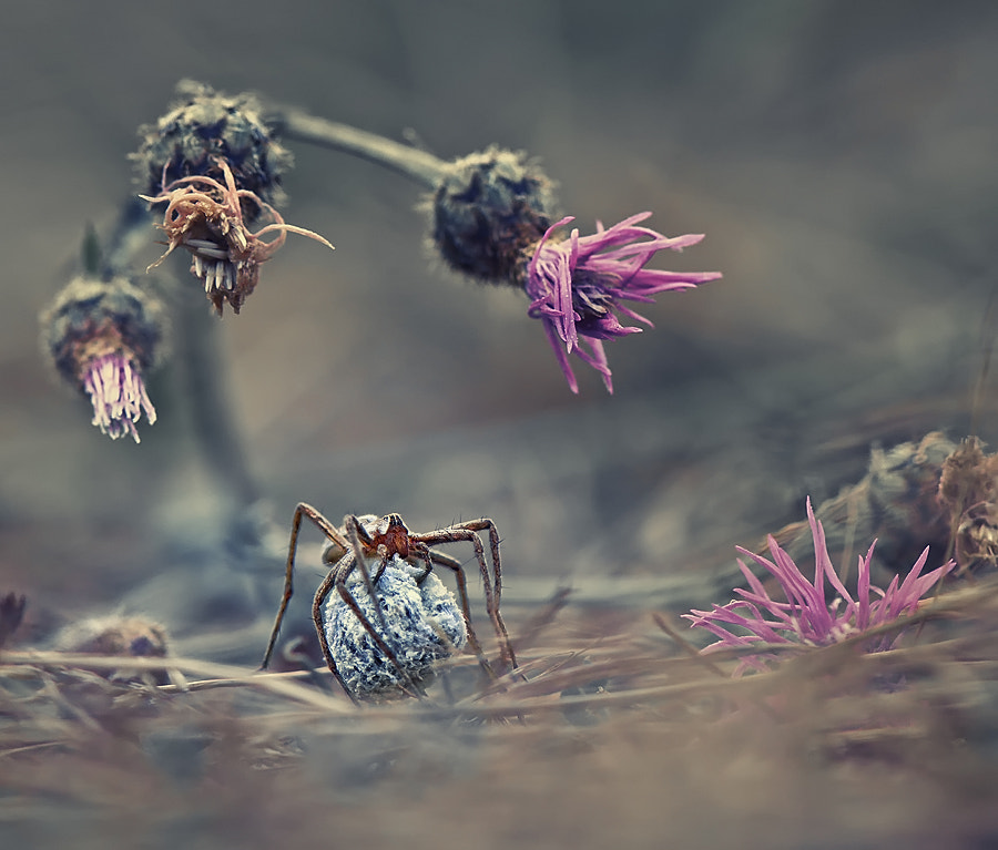 Photograph Welcome to the world of the spider by Krasi St M on 500px