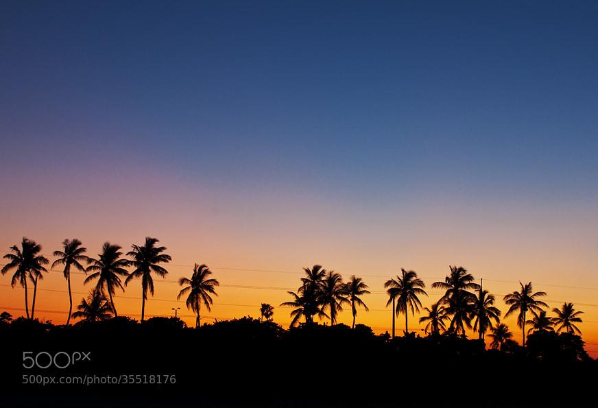 Photograph Palms by Natalya Laykina on 500px