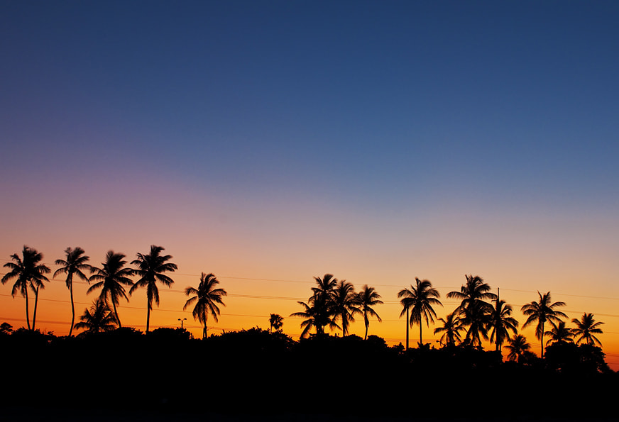 Photograph Palms by Natalya Laykina on 500px