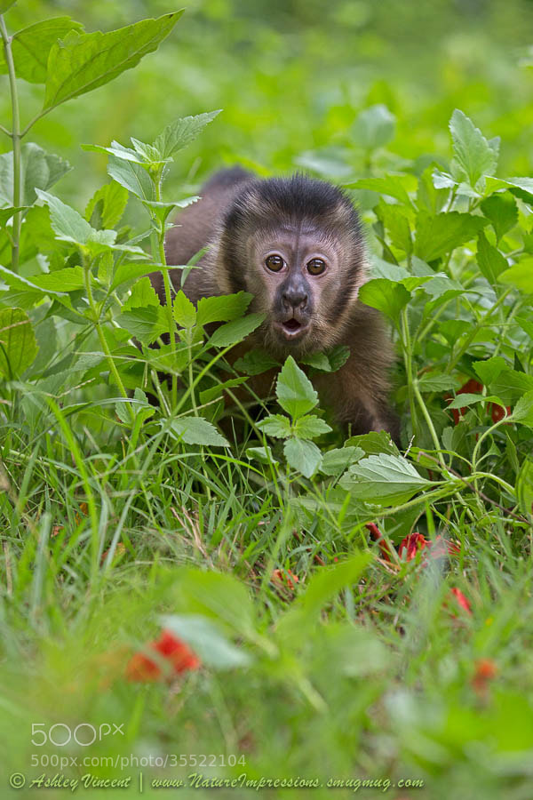 Photograph Monkey Shock by Ashley Vincent on 500px