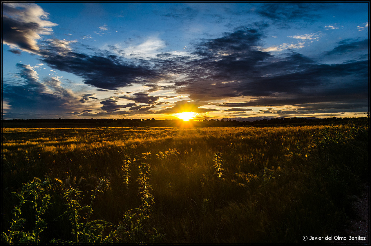 Photograph Country sunset III by Javier del Olmo on 500px