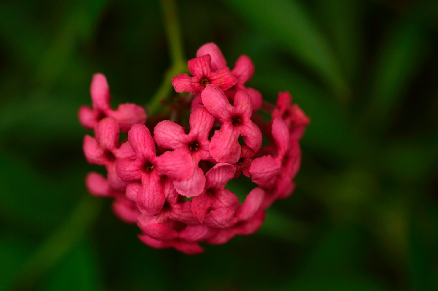 Photograph We're all pretty in pink by Zayan  on 500px