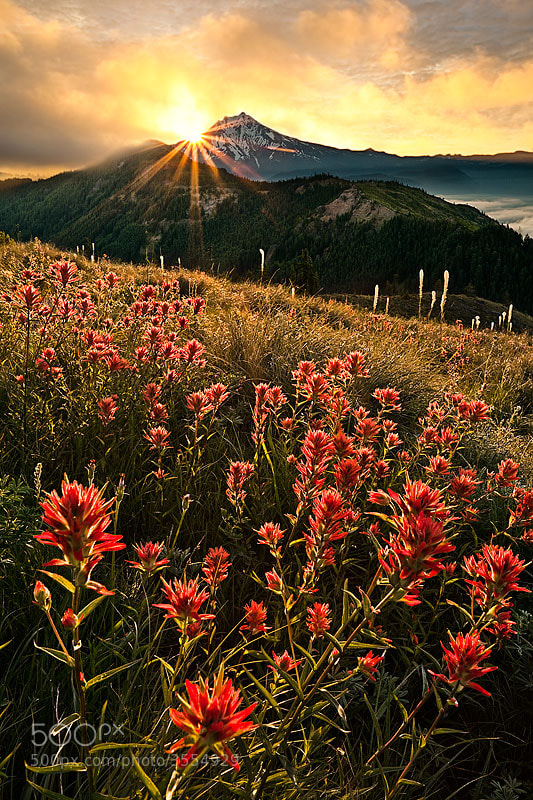 Photograph Red Dawn by Alan Howe on 500px