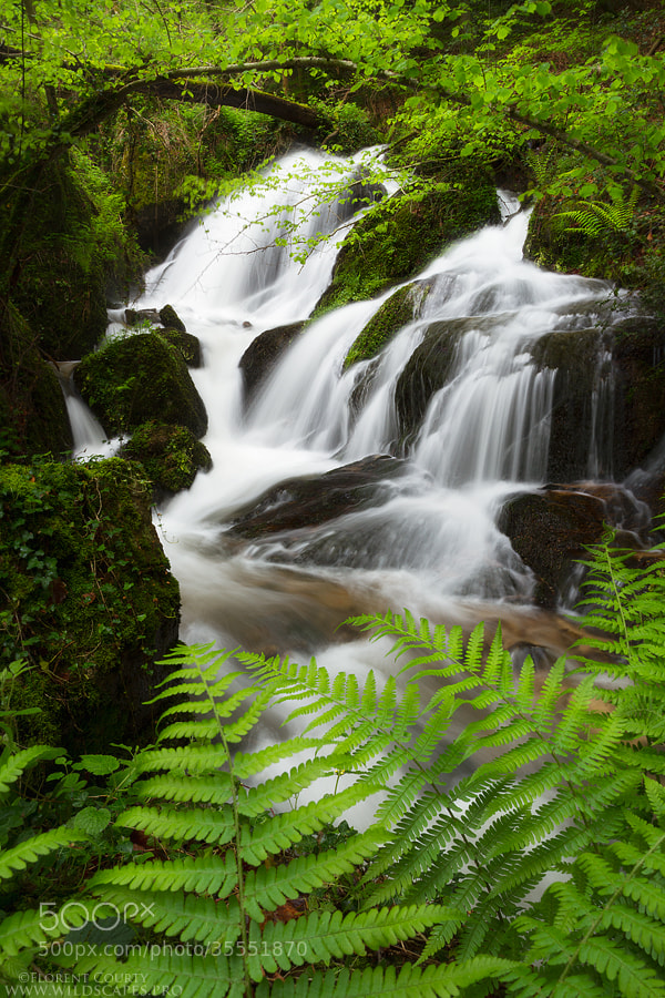 Photograph Luxuriant Waterfalls by Florent Courty on 500px