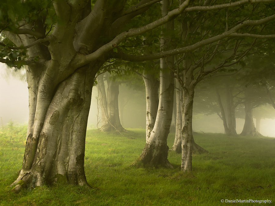 Photograph Enchanted forest by Daniel Martin. on 500px