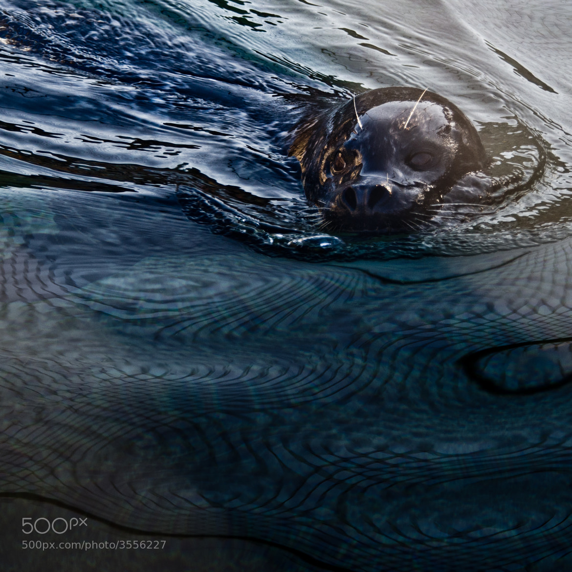 Photograph Netty waters by Mukul Soman on 500px