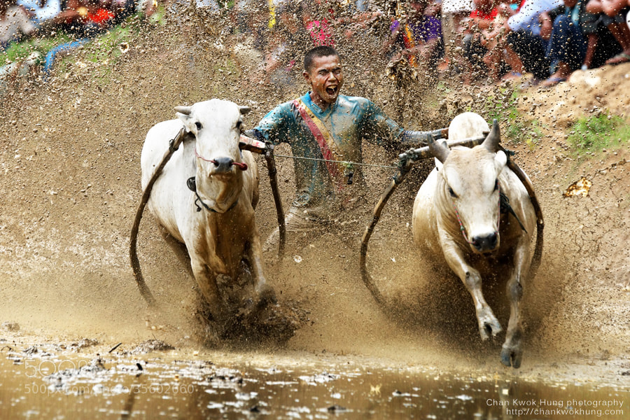 Photograph Buffalo Race by Chan Kwok Hung on 500px