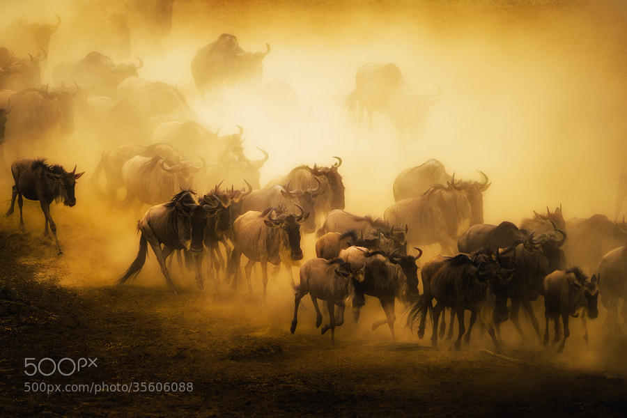 Photograph To Migrate by Mohammed Alnaser on 500px
