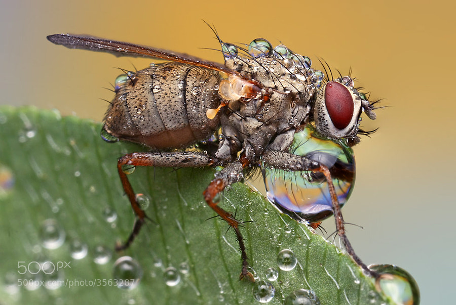 Insects cope in a downpour @ ShockBlast