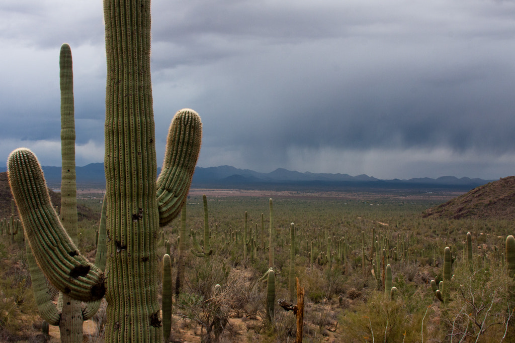 Photograph Saguaro Storm by Wes Smith on 500px