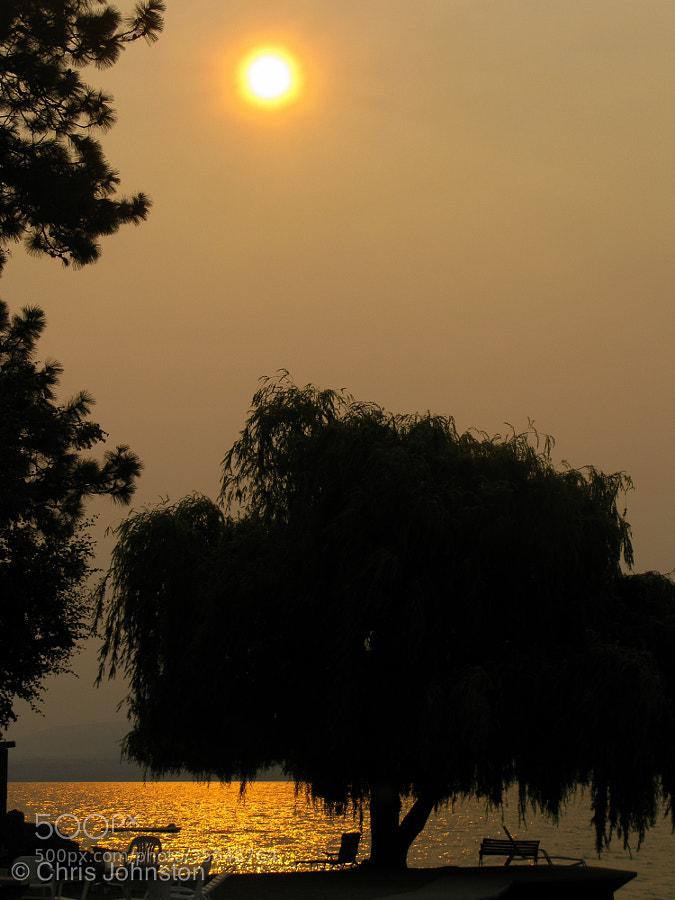 Summer Sun by Christopher Johnston (fuzzylizardstudios)) on 500px.com
