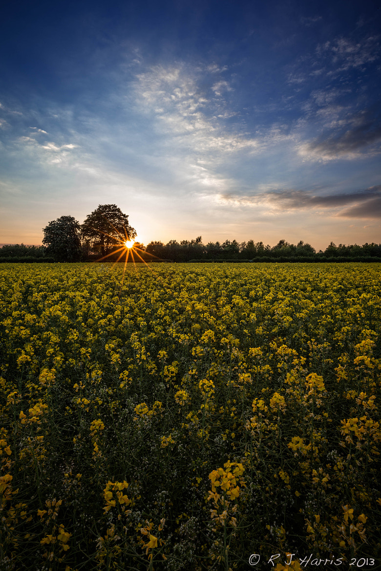 Photograph Golden Field Sunset by Rob Harris on 500px