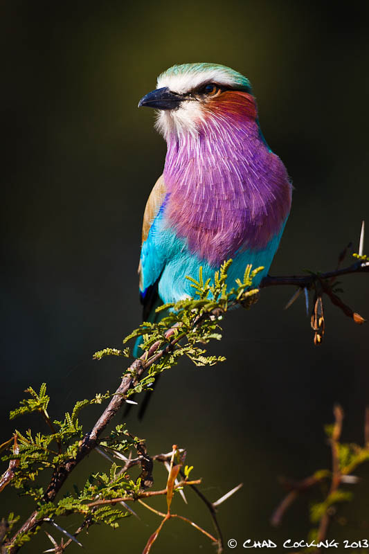 Photograph Colours of the Rainbow by Chad Cocking on 500px