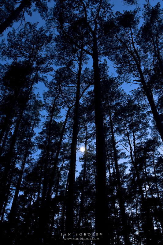 Photograph Lonely moonlight is trapped in the long shadows of the forest by Evgeny Tchebotarev on 500px