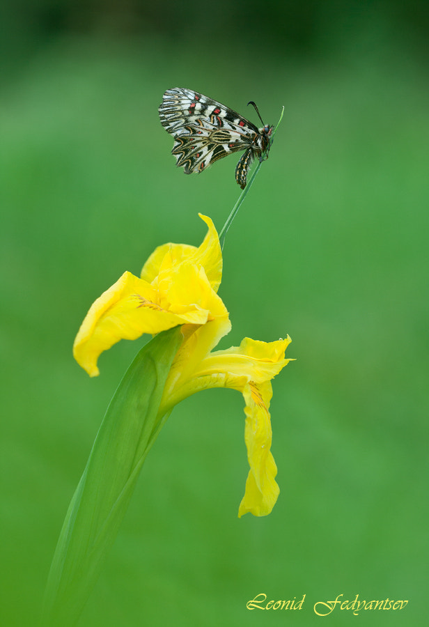 Photograph Polly On The Yellow Flag by Leonid Fedyantsev on 500px