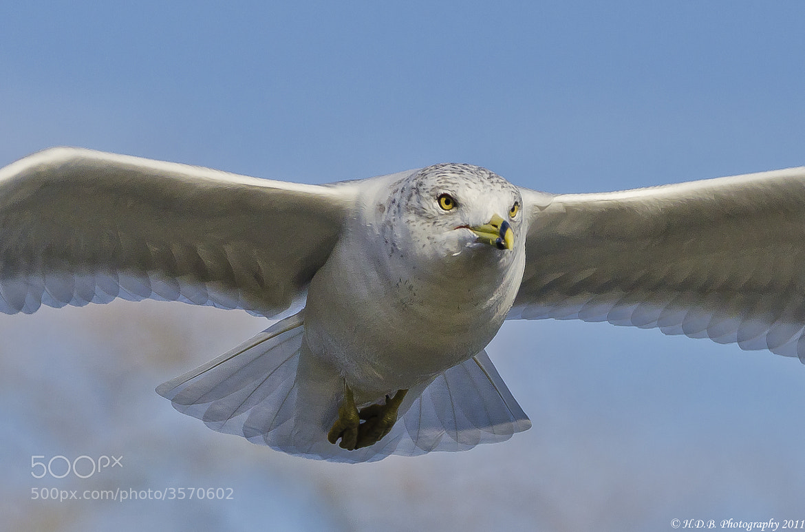 Photograph Incoming by Harold Begun on 500px