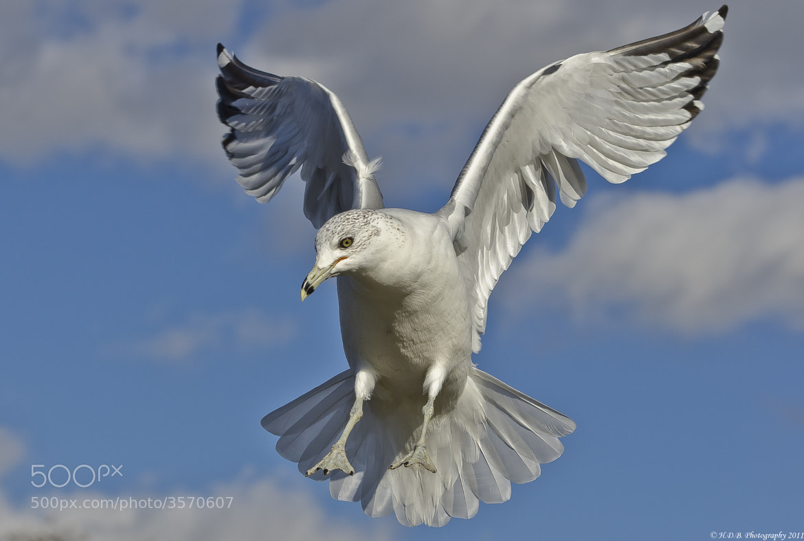 Photograph Air Brakes by Harold Begun on 500px