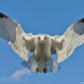 Wingspan by Harold Begun (HaroldBegun)) on 500px.com