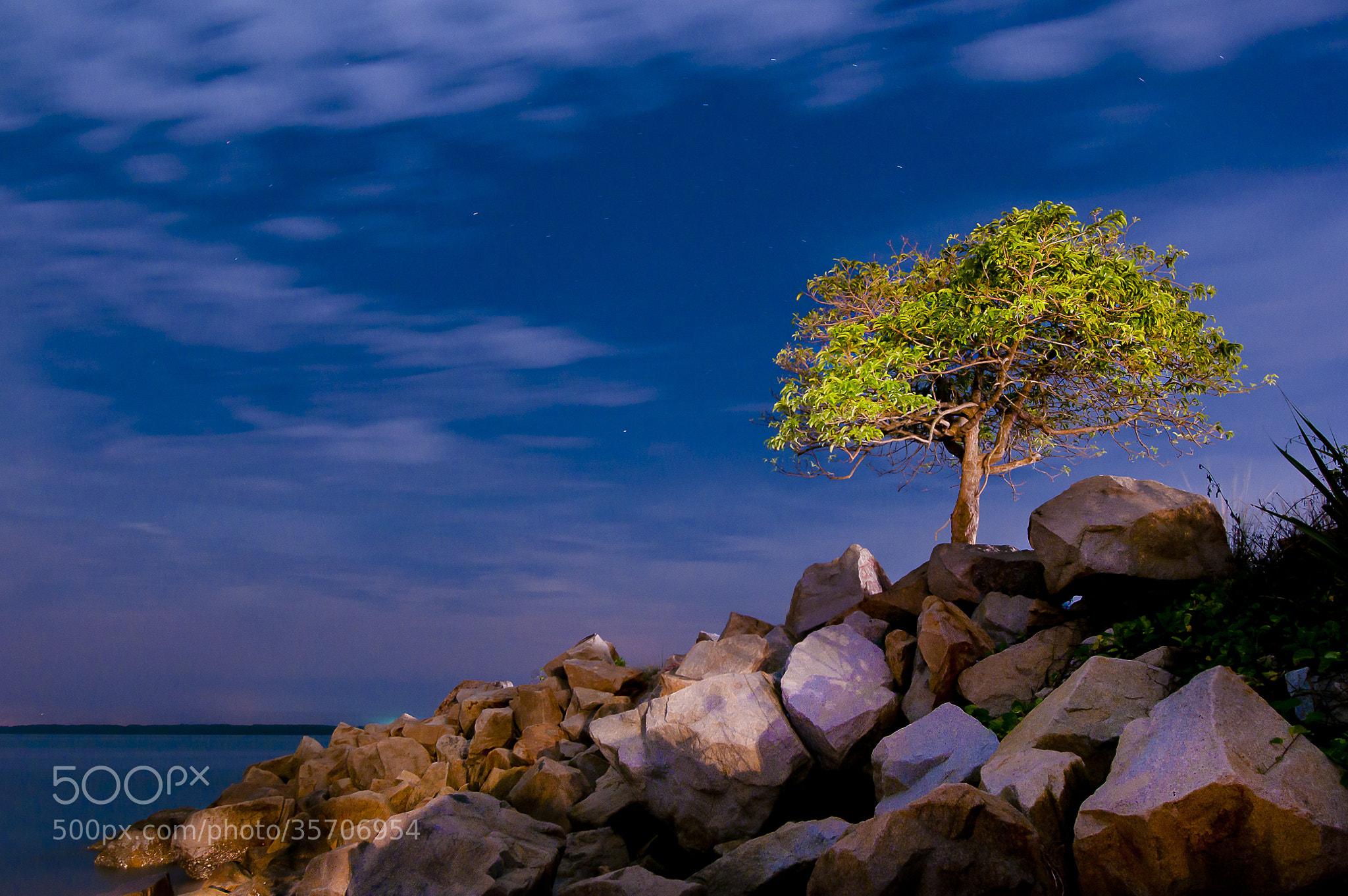 Photograph A Lonely Tree by mradz radz on 500px