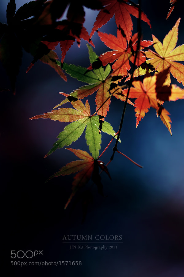 Autumn Colors by Junya Hasegawa (JIN-X3)) on 500px.com